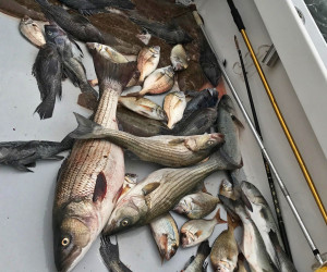 Stripers, Sea Bass, Fluke and Porgy fishing with Southbound Charters
