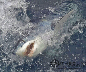 Mako Shark fishing aboard Southbound Fishing Charters out of Waterford, CT