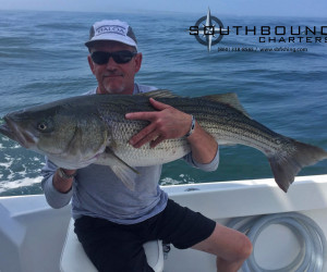 Big Striped bass on Southbound Fishing Charters out of Waterford, Connecticut