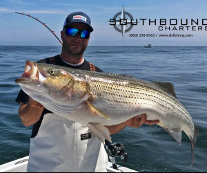 Big Striped bass fishing with Southbound Charters from Waterford, Connecticut